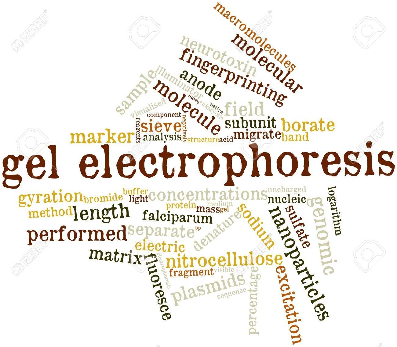 Electrophoresis Related